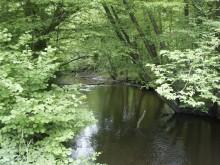 Zarybianie Regi pstrągiem potokowym