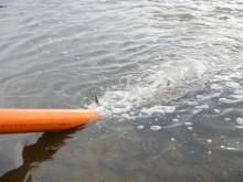 Zarybienia Odry łososiem i trocią
