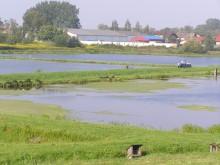 Stawy Ośrodeka Hodowlano Zarybieniowego w Goleniowie